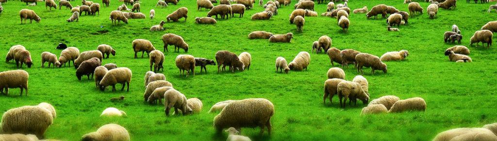 Nachhaltigkeit about us woolbond